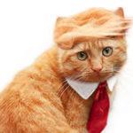 Оригинал Pet Собака Кот Трамп Стиль Кот Парик Домашние животные Костюмная головка Одежда Одежда Игрушка для рождественских вечеринок