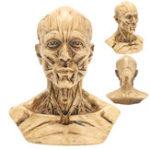 """Оригинал 4 """"10 см Анатомическая анатомия человека Череп Головная мышца кости Медицинская Модель Home Decor"""