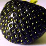 Оригинал Egrow 200 PCS Black Strawberry Семена Свежее экзотическое вкусное фруктовое горшечное семя Сад Бонсай Растение