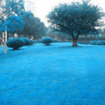Оригинал Egrow 500 PCS Blue Grass Seed Редкий Lawn Семена Сад Украшение во дворе Многолетняя трава