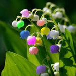 Оригинал Egrow 50 PCS Редкий Цветок лилии долины Семена Цветной радужный колос орхидеи Сад Бонсай