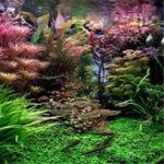 Оригинал Egrow 1000 PCS Аквариум Растение Семена Сосновые бордюры Raras Растениеs Водные украшения для танков рыбы Семена