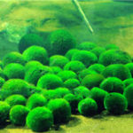 Оригинал Egrow 1000 PCS Аквариум Трава для рыбы Семена Вода Aquatic Растение Семена Декоративная лужайка