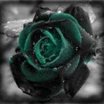 Оригинал Egrow 100 шт Черная роза Семена Темно-зеленая роза Сад Бонсай Многолетние растения Семена цветов