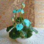 Оригинал Egrow 5Pcs Lotus Семена Blue Green Bowl Lotus Water Lily Семена Редкий Водный цветок Растение Семя