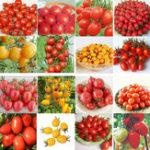 Оригинал Egrow 200Pcs Томатный Семена Сад Овощной посадкой Красный Желтый Черный Potted Tomatoes Bonsai