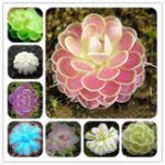Оригинал Egrow 100Pcs / Сумка Насекомоядные Растение Семена Суккуленты Dionaea Muscipula Venus Flytrap Bonsai Seed