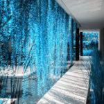 Оригинал Egrow 100 Pcs / Сумка Blue Pearl Chlorophytum Seed Potted Plants Цветы для Сад & Indoor Decoration