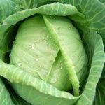 Оригинал Egrow 100Pcs / Pack Гигантская капуста Семена Органические витаминные овощи Семена Внутренние растения