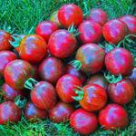 Оригинал Egrow 100Pcs / Pack Black Tomato Семена Сад Lycopersicon Esculentum растения Семена Фунт Бонсай