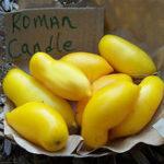 Оригинал Egrow 100Pcs / Pack Манго-помидор Семена Сад Горшечная посадка фруктовых овощей