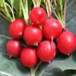 Оригинал Egrow 50Pcs / Pack Cherry Radish Семена Зеленые растения Сад Овощи для кухни Семена