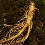 Оригинал Egrow 50Pcs / Pack Женьшень Семена Сад Горшечные травяные растения Семена