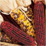 Оригинал Egrow 10Pcs / Pack Mix Цвет Кукуруза Семена Фруктовая растительность Семена Сад Украшение Бонсай Растение