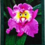 Оригинал Egrow 100Pcs / Pack Monkey Face Orchid Семена Главная Сад Бонсай Растения Цветы