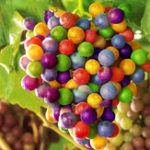 Оригинал Egrow 50Pcs / Pack Grape Семена Rainbow Colorful Сад Фруктовые растения Sweet Kyoho Grape Семена