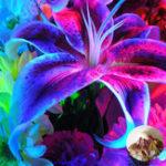 Оригинал Egrow 100Pcs / Pack Blue Lily Flower Семена Приятный аромат Сад Бонсай Цветы Бонсай Посадка