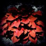 Оригинал Egrow 150Pcs / Pack Hosta Flower Семена Сад Многолетники Декоративные лилии Shade Hosta Plants Семена