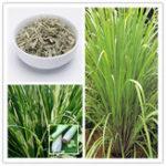 Оригинал Egrow 30Pcs / Pack Лимонная трава Семена Главная Сад Травяные растения DIY Домашние Essential Масло