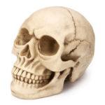 Оригинал 1: 1 Lifesize Resin Replica Human Череп Медицинская Модель Образовательный преподавательский руководитель Анатомия