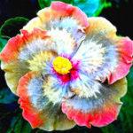 Оригинал Egrow 50Pcs / Pack Гигантский цветок гибискуса Семена Сад & Home Многолетние растения в горшках Цветы