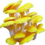 Оригинал Egrow 50Pcs / Pack Органический гриб Семена Съедобный Здоровье Овощной Семена Для Сад фермы Swamm растения