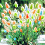 Оригинал Egrow 100Pcs / Pack Rabbit Tail Grass Семена Смешанный цвет Сад Bunny Tail Grass Decor Plants