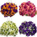 Оригинал Egrow 100Pcs / Сумка Petunia Семена Petunia Растения Висячие бонсай Mini Petunia Красивый цветок Семена для дома Сад Bonsai Pot Planting Flower Семена