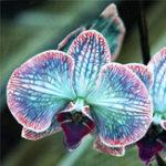 Оригинал Egrow 200pcs / Сумка Редкий Orchid Семена Bonsai Растение Семена Цветок природного роста Семена для дома Сад