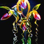 Оригинал Egrow 20pcs / Сумка Sementes Orchid Семена Редкий Цветочная орхидея Семена Для дома Сад Растения