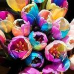 Оригинал Egrow 120Pcs / Pack Tulip Flower Семена Фиолетовые белые гранивые цветы Многолетние дома Сад Горшечные растения