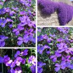Оригинал Egrow 125Pcs / Pack Сад Aubrieta Deltoidea Фиолетовый цветок Семена Многолетние травяные растения