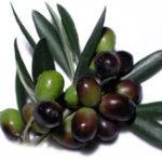 Оригинал Egrow 100Pcs / Сумка Mini Olive Семена Fruit Семена Bonsai Растения для дома Сад Экзотические виды растений Популярные многолетние растения Живые органиче