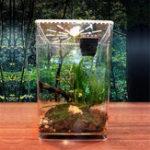 Оригинал Акрил Clear Растение Питательный резервуар для пустых Коробка Растительный насекомое Коробка Украшения для клеток