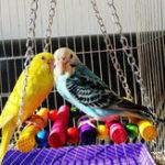 Оригинал Parrot Toy Colorful Деревянный подвесной подвесной мост Постоянный бар Аксессуары для птичьего корма Игрушки для домашних животных