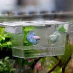 Оригинал Рыба Аквариум Принадлежность Порошок для рыбы Инкубатор Заводчик для разведения Коробка Защита рыбы