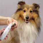 Оригинал Автомат Ногти Clipper Pet Собака Кот Ногти Полировальные принадлежности для ухода за домашними животными