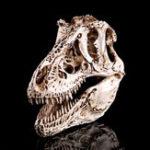 Оригинал 16cm Tyrannosaurus T-Rex Динозавр Смола Череп Модель Коллекционирование Игрушки Дисплей Craft Gift