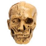 Оригинал 9см Анатомическая Анатомия Человека Череп Мышца Головы Кости Медицинская Модель Home Decor