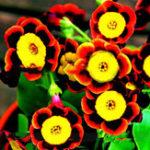 Оригинал Egrow 100 шт. / Упак. Петуния Бонсай Семена Colorful Звезда Петуния Цветок Сад Патио в горшке Растение