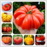 Оригинал Egrow 100 шт. / Сумка Гигантские помидоры Семена Растения Органические реликвии Растения Овощи Многолетние растения без ГМО Горшок Для дома Са