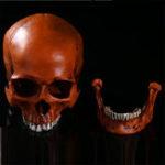 Оригинал 1: 1 в натуральную величину человеческая анатомическая анатомия смола головы скелет Череп Медицинская модель обучения