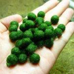 Оригинал Egrow 200 Шт. / Упак. Водные Растения Семена Трава с Смешанными Водными Растениями Аквариум Аквариум Трава Аквариум Мосс Планте