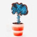 Оригинал Egrow 100 Шт. / Упак. Веерообразные суккулентные Растение Семена кактус суккулентные бонсай для дома Сад Растениеing DIY Растениеing