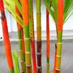 Оригинал Egrow 100Pcs / Pack Colorful Пальма Семена Бонсай Бамбук Семена Дом Сад Дерево Семена