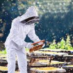 Оригинал Профессиональный Хлопок Всего Пчеловодства Пчеловодство Набор Набор C Фата Капюшон L / XL / XXL
