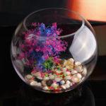 Оригинал Круглая прозрачная стеклянная ваза Fish Tank Ball Bowl Цветок Плантатор Террариум Home Decor