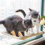 Оригинал              Yani HP-DC1 Pet Кот Гамак для окна Soft Кот Питомники 15KG Кот Безопасная подвесная полка для сиденья для домашних животных