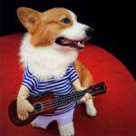 Оригинал              Маленький Большой Пэт Собака Хэллоуин Костюмы Гитарист Пальто Одежда Партия Косплей
