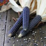 Оригинал              Egrow 20 шт. / Упак. Черная кукуруза Семена Органическая овощная кукуруза для дома Сад Растение